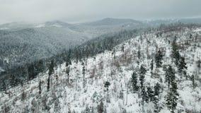 Paisagem da montanha, montanhas carpatian, inverno fotos de stock