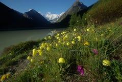 Paisagem da montanha Montanhas, os picos de montanha, desfiladeiros e vales As pedras nas inclinações Fotografia de Stock