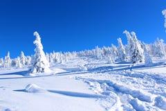 Paisagem da montanha no inverno Imagem de Stock