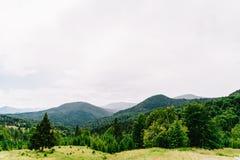 Paisagem da névoa de Forest With Evergreen Trees In da montanha Carpathian imagens de stock