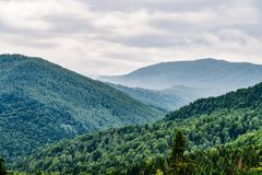 Paisagem da névoa de Forest With Evergreen Trees In da montanha Carpathian imagem de stock