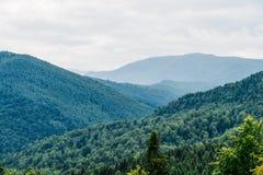 Paisagem da névoa de Forest With Evergreen Trees In da montanha Carpathian imagem de stock royalty free