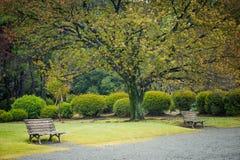 Paisagem da natureza de árvores do outono no Tóquio Japão do parque do shinjuku fotografia de stock