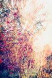 Paisagem da natureza do outono com árvores da queda e arbusto do quadril cor-de-rosa no jardim ou no parque Imagens de Stock Royalty Free