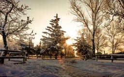 Paisagem da neve da manhã de janeiro imagem de stock royalty free