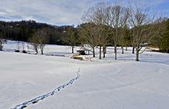Paisagem da neve do inverno Foto de Stock