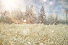 Paisagem da neve do inverno imagens de stock royalty free
