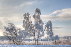 Paisagem da neve do inverno, brejos altos, Bélgica Imagens de Stock