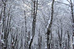 Paisagem da neve no inverno Imagem de Stock