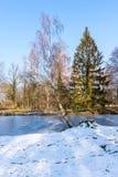 Paisagem da neve no inverno, lago congelado, árvores perto da água fotos de stock royalty free
