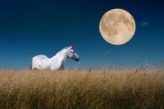 Paisagem da noite com os cavalos na lua Fotografia de Stock Royalty Free