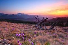 Paisagem da noite da montanha Imagem de Stock