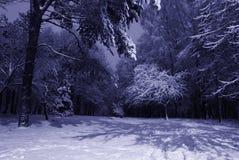 Paisagem da noite do inverno fotografia de stock royalty free