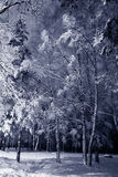 Paisagem da noite do inverno Foto de Stock Royalty Free