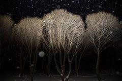 Paisagem da noite do inverno com as árvores cobertas com a neve na luz com queda de neve imagem de stock