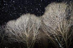 Paisagem da noite do inverno com as árvores cobertas com a neve com queda de neve, céu escuro fotografia de stock