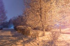 Paisagem da noite do inverno de árvores cobertos de neve no parque Árvores nevado e estrada imagem de stock