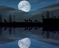 Paisagem da noite dos cavalos ilustração royalty free