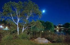 Paisagem da noite, park_1 Fotografia de Stock Royalty Free