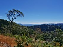 Paisagem da pastagem e da floresta da árvore no cenário do monte Fotos de Stock Royalty Free