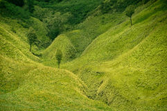 Paisagem da pradaria e pares verdes de árvores fotos de stock royalty free