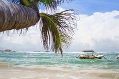 Paisagem da praia com palma Foto de Stock