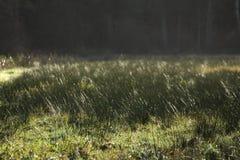 Paisagem da precipitação Imagens de Stock Royalty Free