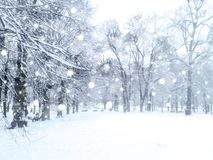Paisagem da queda de neve do inverno Imagens de Stock Royalty Free