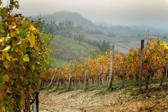Paisagem da região do vinho de Barolo imagens de stock royalty free
