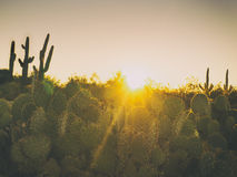 Paisagem da árvore do cacto do deserto do Arizona Fotografia de Stock Royalty Free