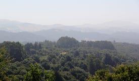 Paisagem da sequoia vermelha imagens de stock