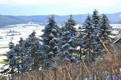 Paisagem da terra da maravilha do inverno com árvores Fotografia de Stock Royalty Free