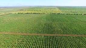 Paisagem da terra rural, vídeo aéreo vídeos de arquivo