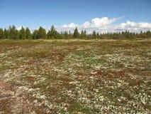 Paisagem da tundra Fotos de Stock