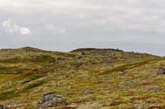 Paisagem da tundra atrás do círculo polar Foto de Stock