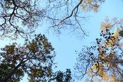 Paisagem das árvores e do céu Foto de Stock Royalty Free