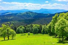 Paisagem das montanhas Carpathian Imagem de Stock