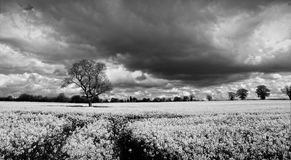 Paisagem das nuvens de tempestade imagens de stock