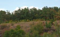 Paisagem de árvores, de montanhas e do vale verdes Fotografia de Stock Royalty Free