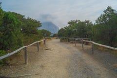 A paisagem de árvores do zimbro no mundo novo Foto de Stock Royalty Free
