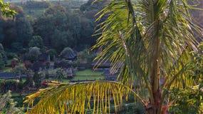 A paisagem de Bali, Jatiluwih, arroz coloca, palmeira Imagem de Stock Royalty Free