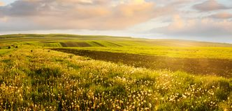 Paisagem de campos agrícolas e do dente-de-leão iluminado que nivelam luzes fotografia de stock