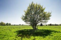 Paisagem de campos verdes Fotos de Stock Royalty Free