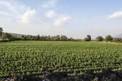 Paisagem de cultivo mexicana Imagens de Stock