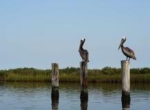 Paisagem de dois pelicanos imagens de stock