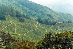 Paisagem de Forest Highlands, estrada da montanha foto de stock royalty free