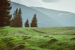 Paisagem de grandes montanhas no por do sol Fotografia de Stock