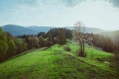 Paisagem de grandes montanhas no por do sol Imagens de Stock