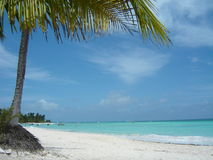 Paisagem de Isla Saona Imagens de Stock Royalty Free