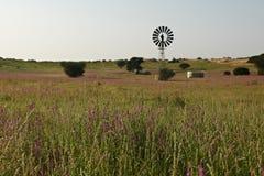 Paisagem de Kalahari com flores roxas Foto de Stock